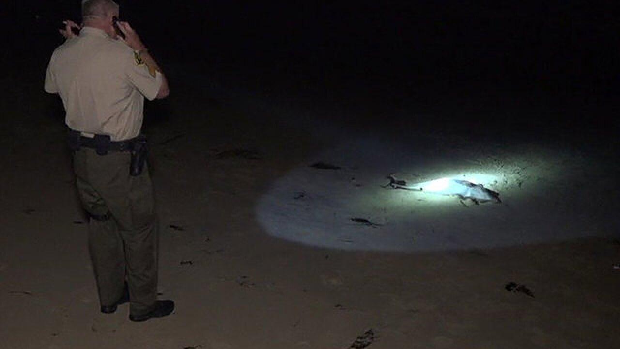 Dead dolphin found next to note written in sand