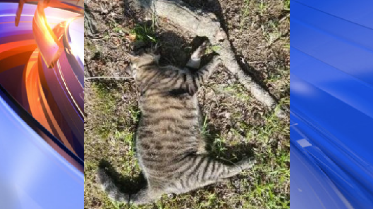 Virginia Beach family finds their cat strangled to death in neighbor's yard
