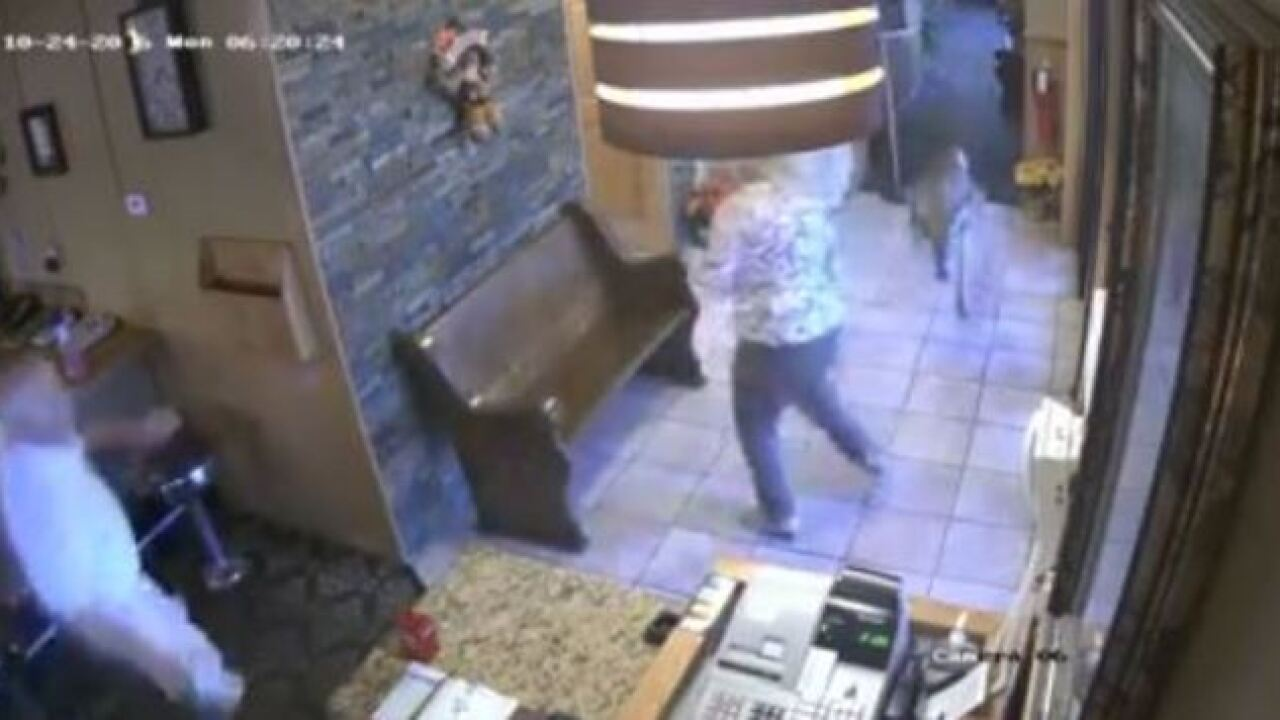 VIDEO: Deer crashes through Saint John cafe