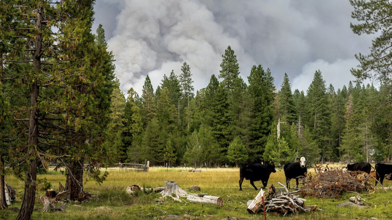 Dixie Fire, California