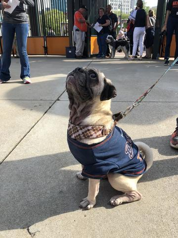 Tigers host first Bark at the Park night of 2018 season