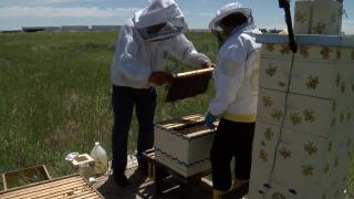 centennial airport bees.png