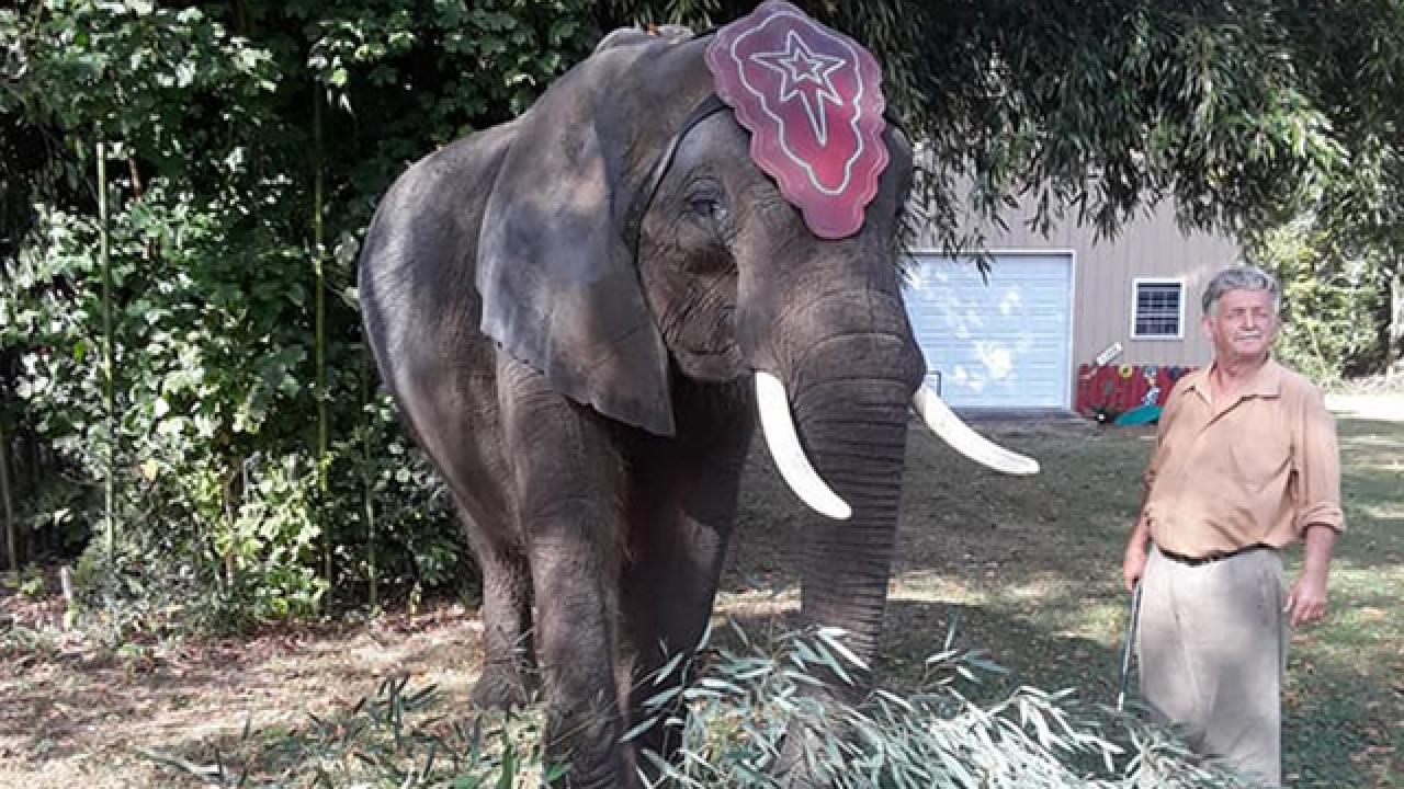 Polk circus fights to bring elephant back to FL