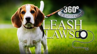 360° Perspective: Leash Laws