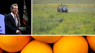 Ag Report: Gavin Newsom, Farming, Oranges