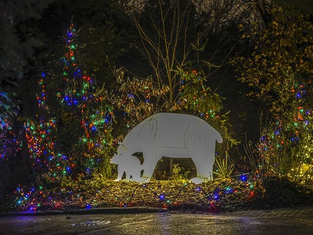 Get a sneak peek at the Cincinnati Zoo's Festival of Lights