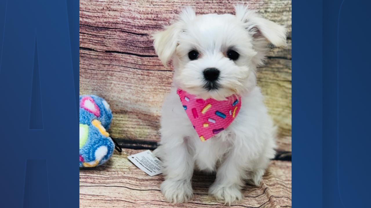 stolen-puppy.png