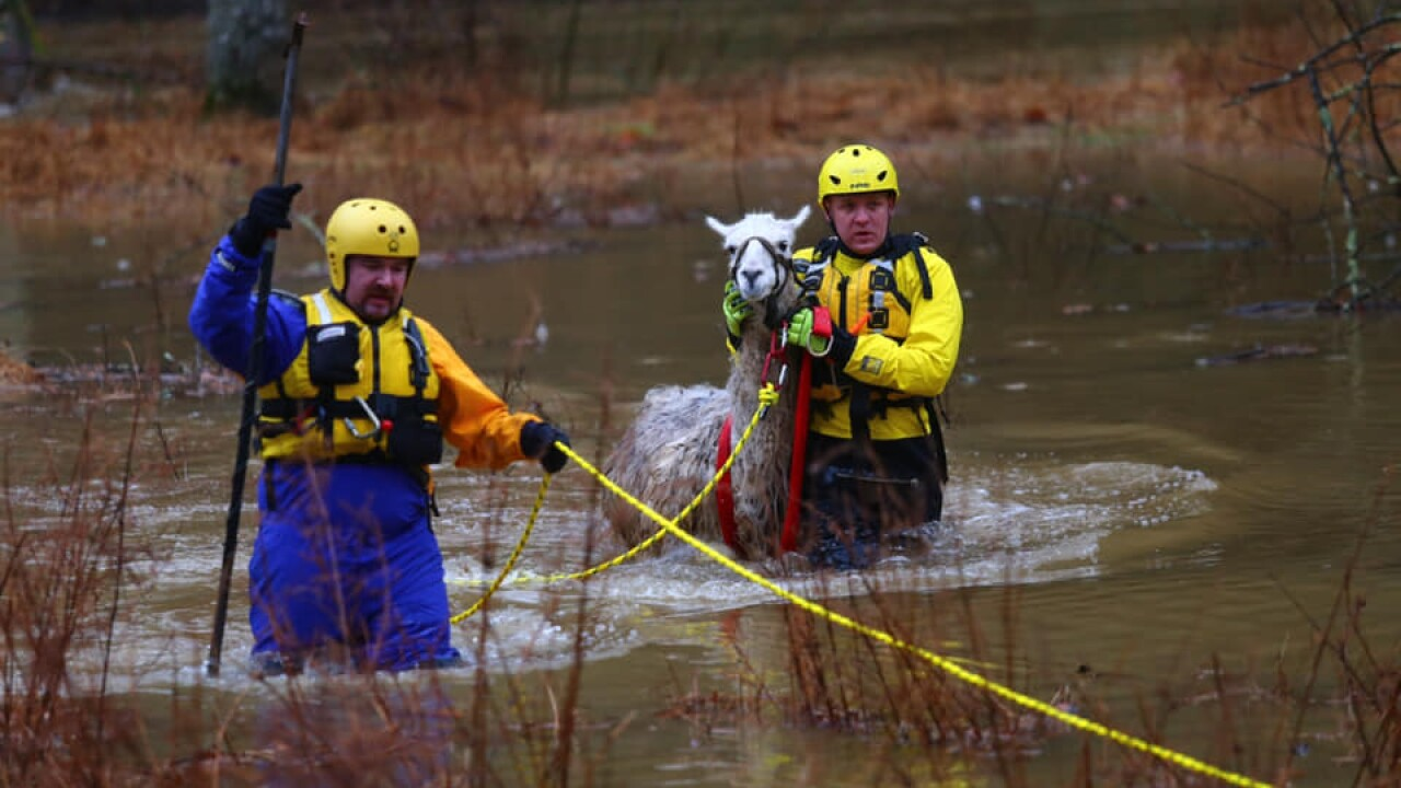 Howard Co Fire crews save Llama and car driver from flood