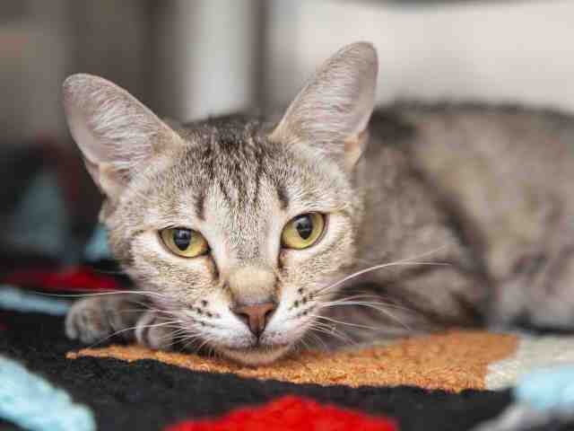 Adoptable pets from Arizona Humane Society and Maricopa County Animal Care (7/4)
