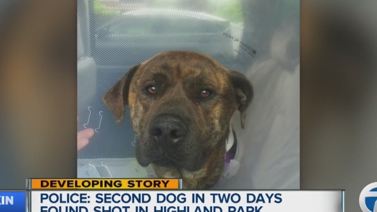 Mastiff mix rescued, recovering from gunshot