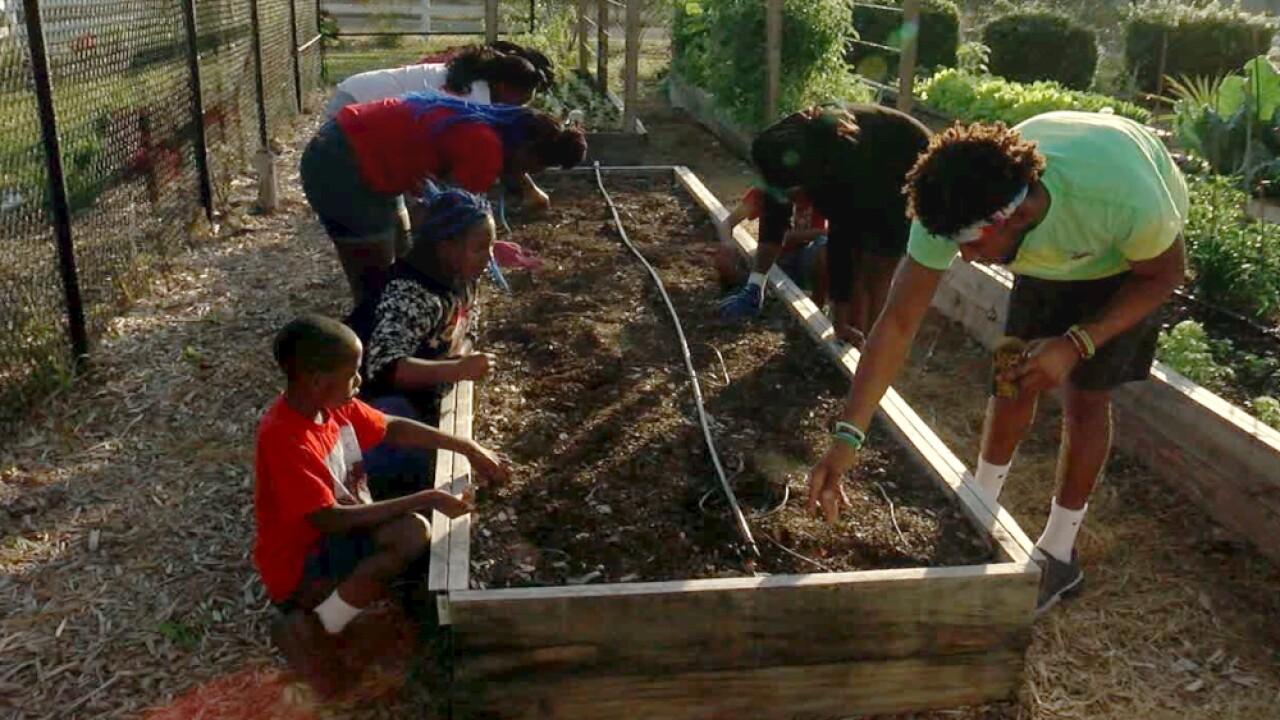 Cops 'N Kids community garden Tarpon Springs