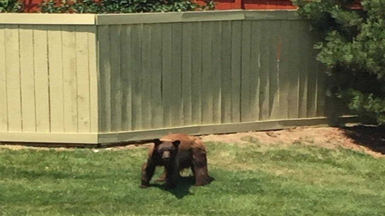 Bear spotted in Denver neighborhood