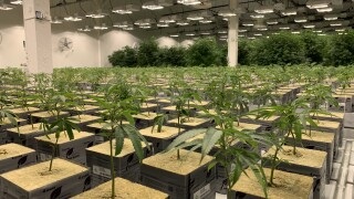 Photos: One of Utah's first medical cannabis grow facilities opens inTooele