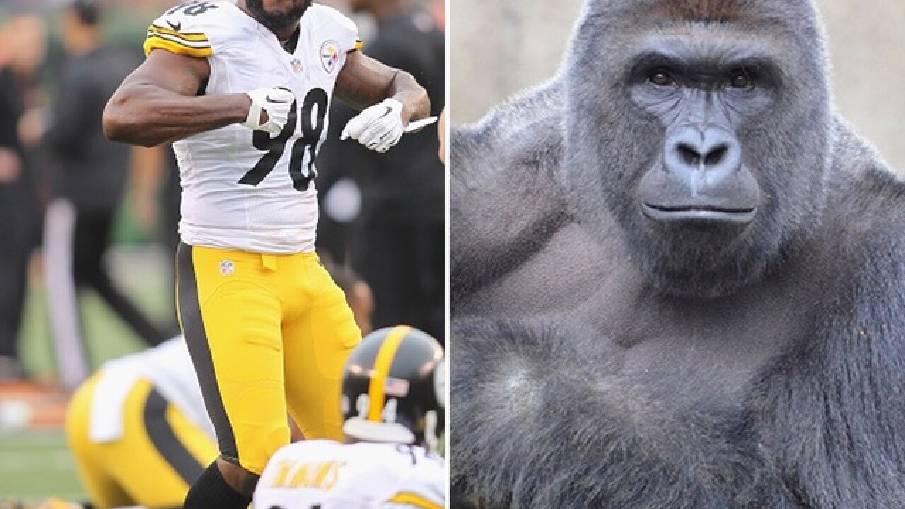 Steelers LB Vince Williams fuels rivalry fire with dead gorilla joke