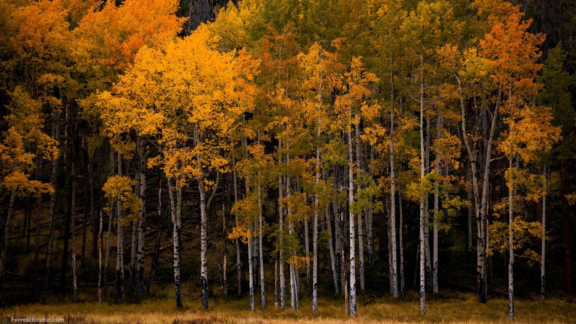 Rocky Mountain National Park Forrest Boutin Photography.jpg