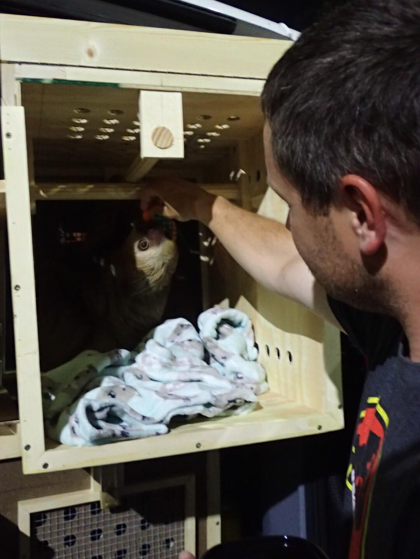 Baby Sloths (34).JPG