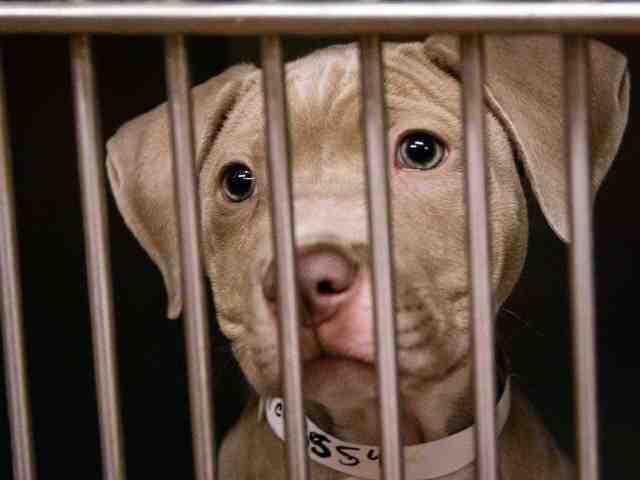 Adoptable pets available from Arizona Humane Society and Maricopa County Animal Care (6/13)