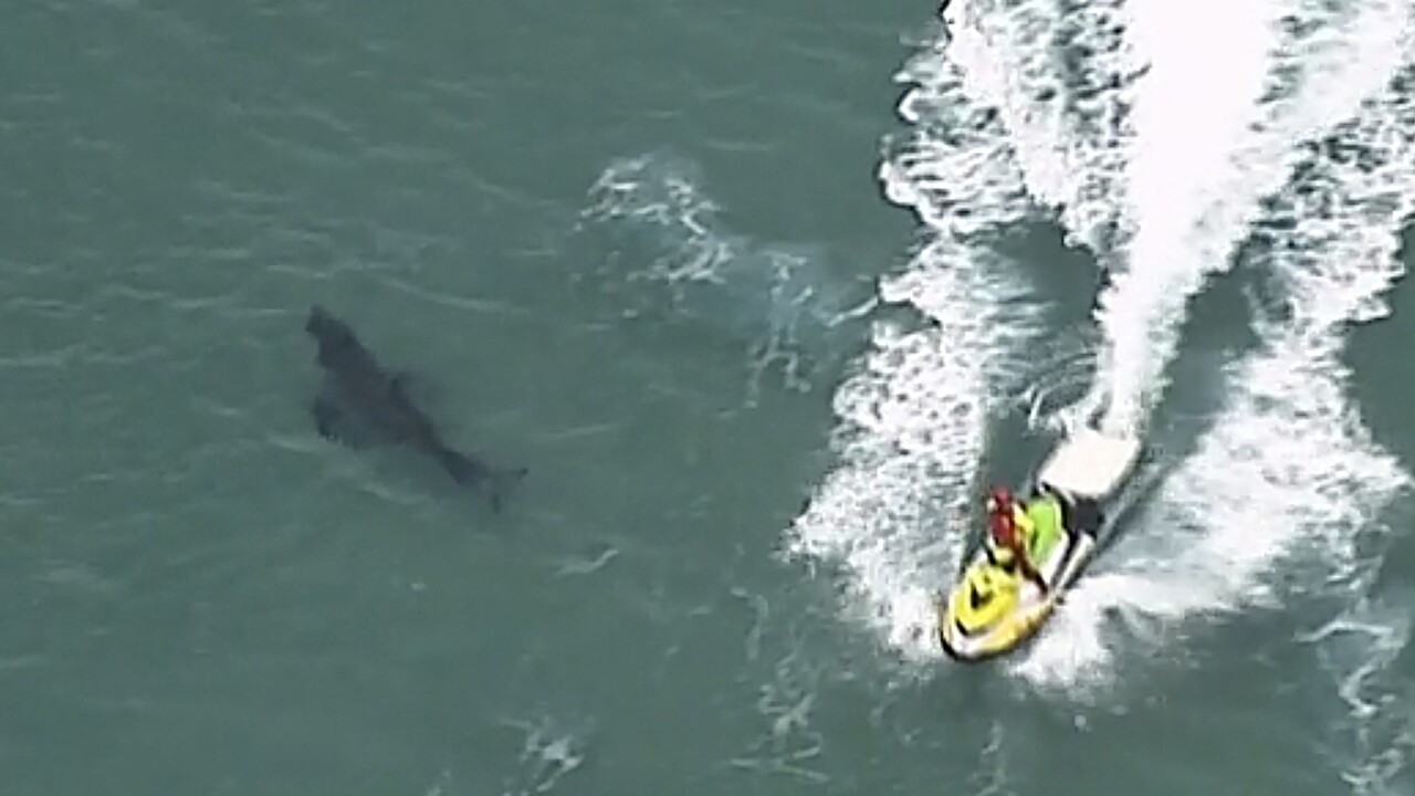 10-foot great white shark kills 60-year-old surfer in Australia