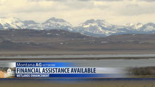 Montana Ag Network: May 23rd Report – Assistance for enhancing wetlands, potential strawberry shortage