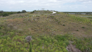 Walking Club: Exploring Cockroach Bay Nature Preserve in southern Hillsborough County