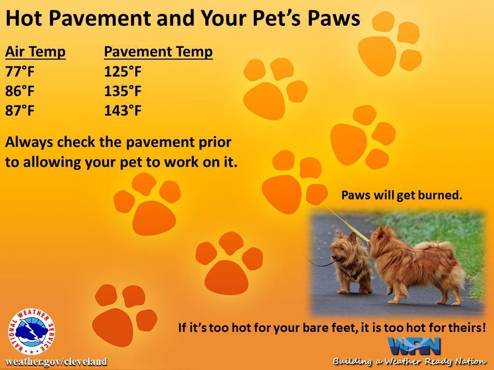 pavement-dogs-pets-heat.jpg