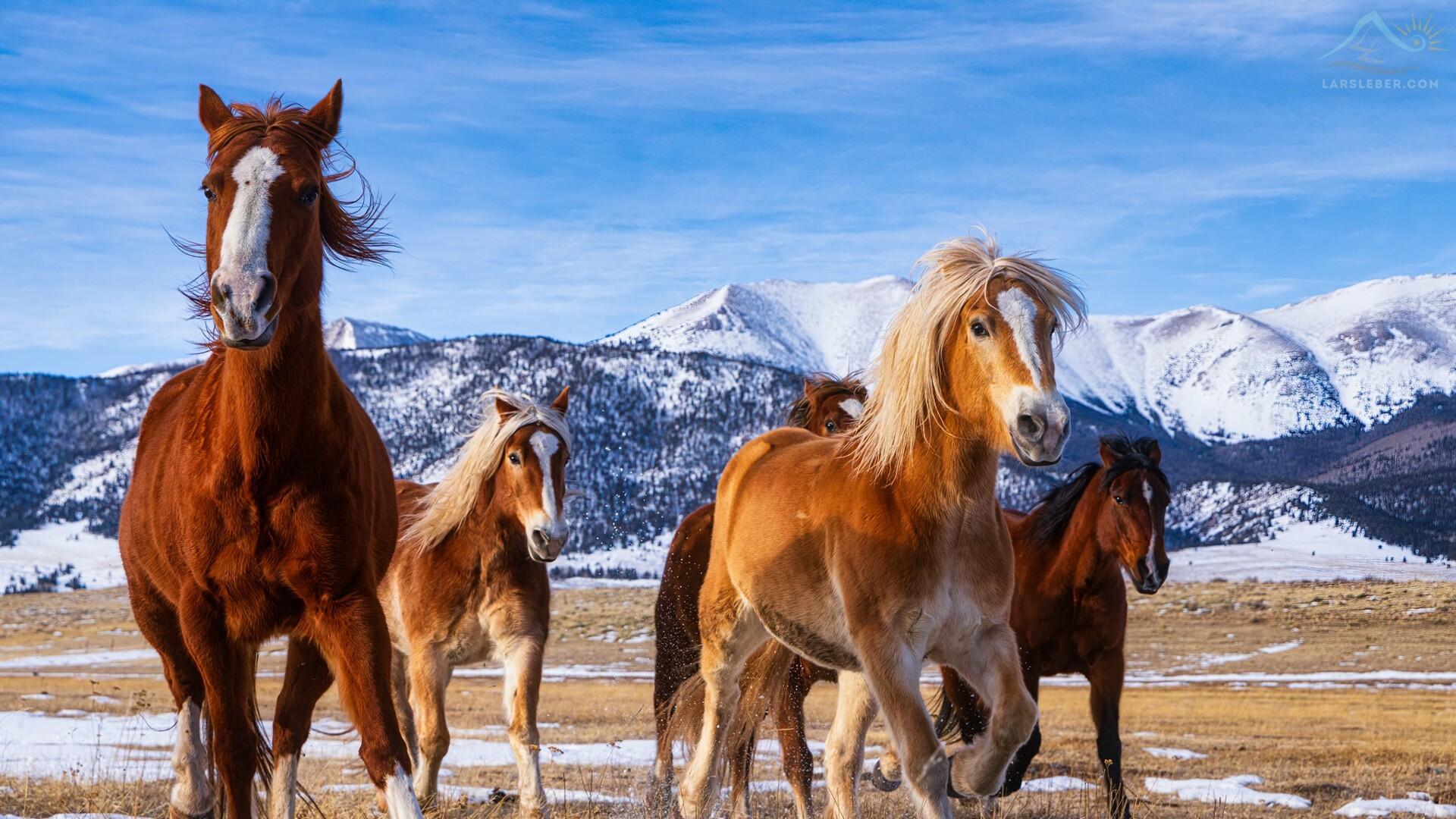 Horses running in Westcliffe Lars Leber Photography.jpg