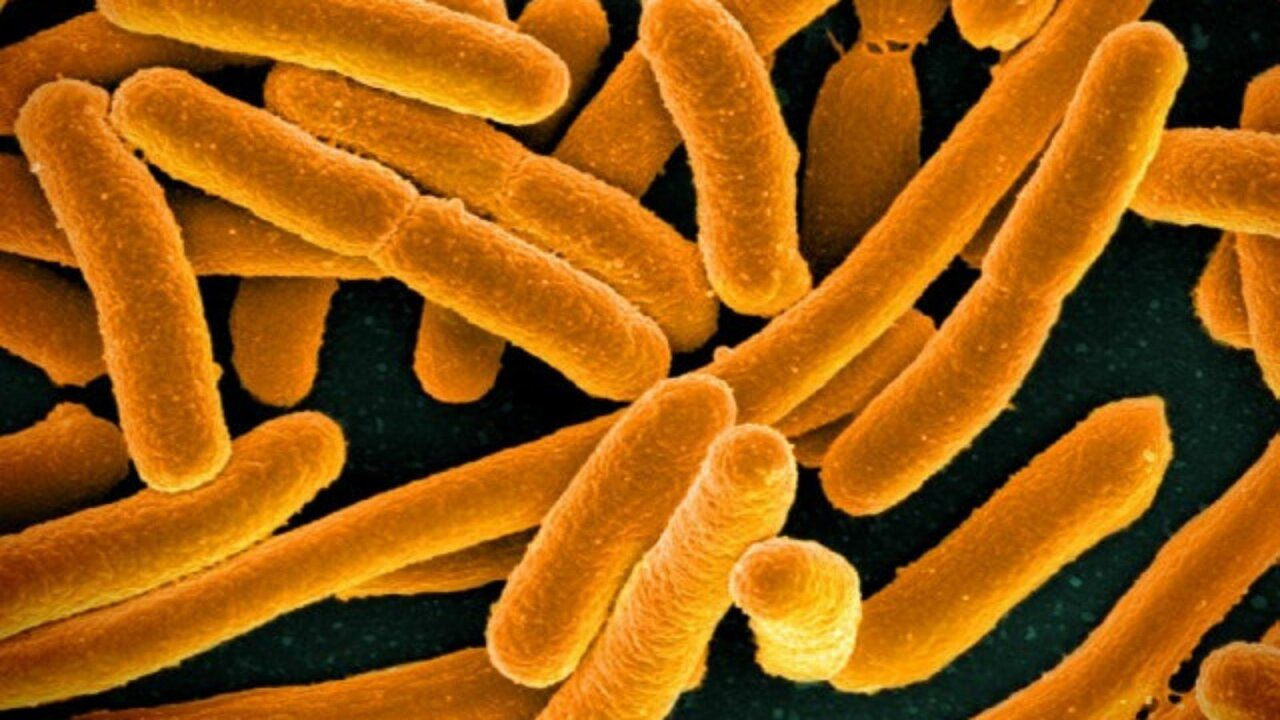 CDC: Mystery E. coli outbreak sickens 72 people in 5 states, including Virginia
