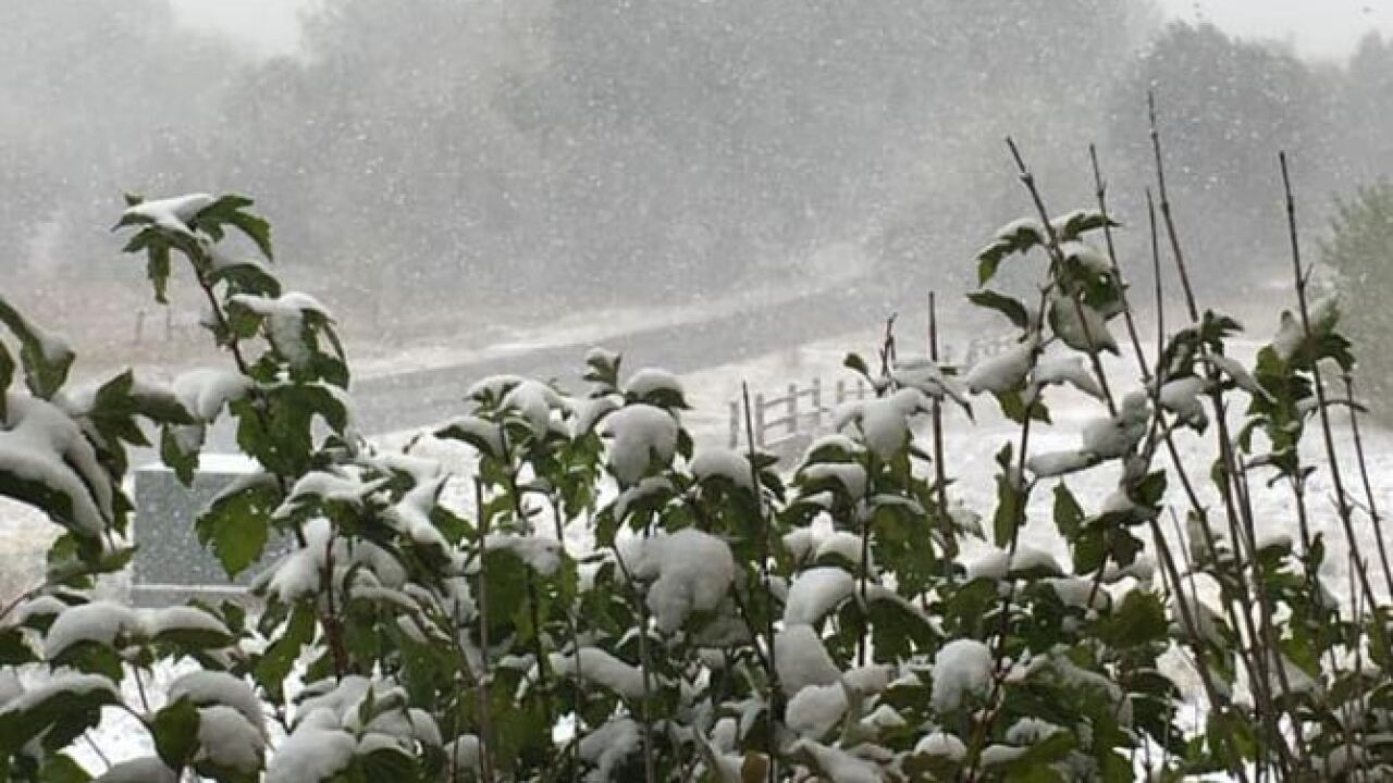 Snow on plants in Fountain