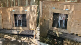 4 people were arrested and 6 animals were rescued at a recent drug bust in Vero Beach.