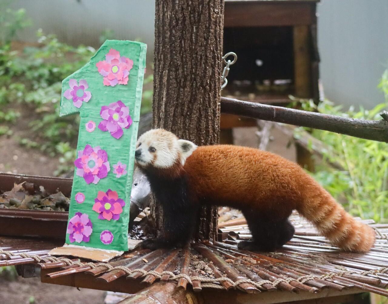 Panda Birthday 2.jpg