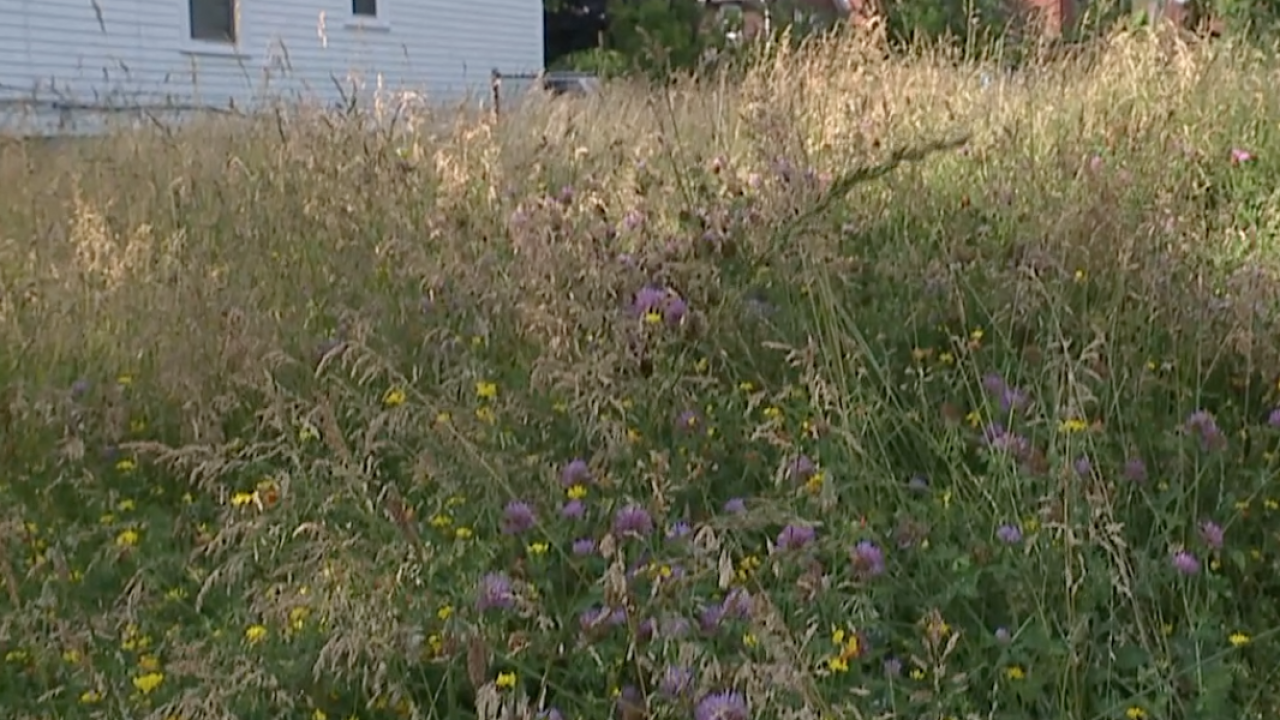CLE city lawn cutting behind, residents worried about safety
