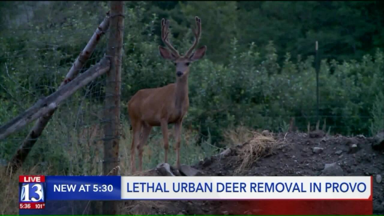 Provo City Council adopts all-lethal urban deer removal program
