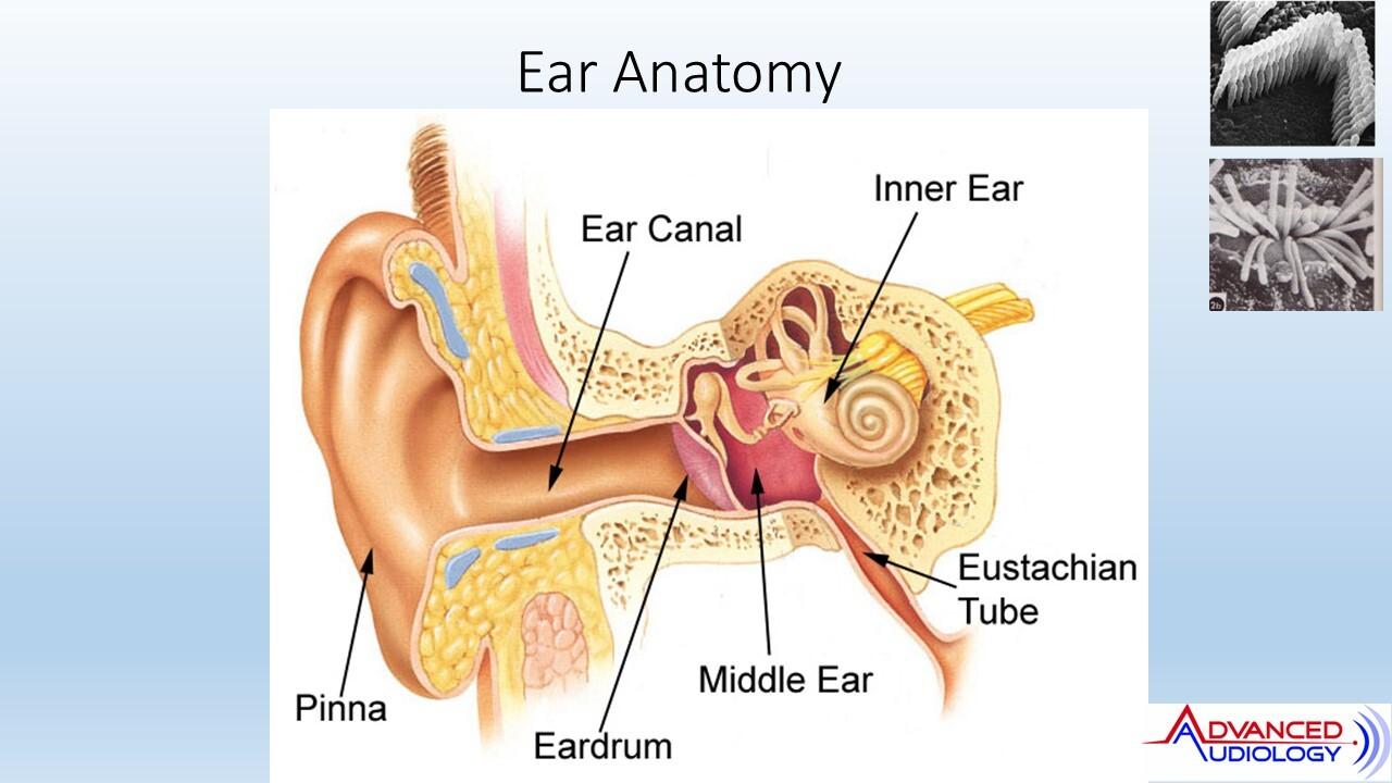 Advanced Audiology