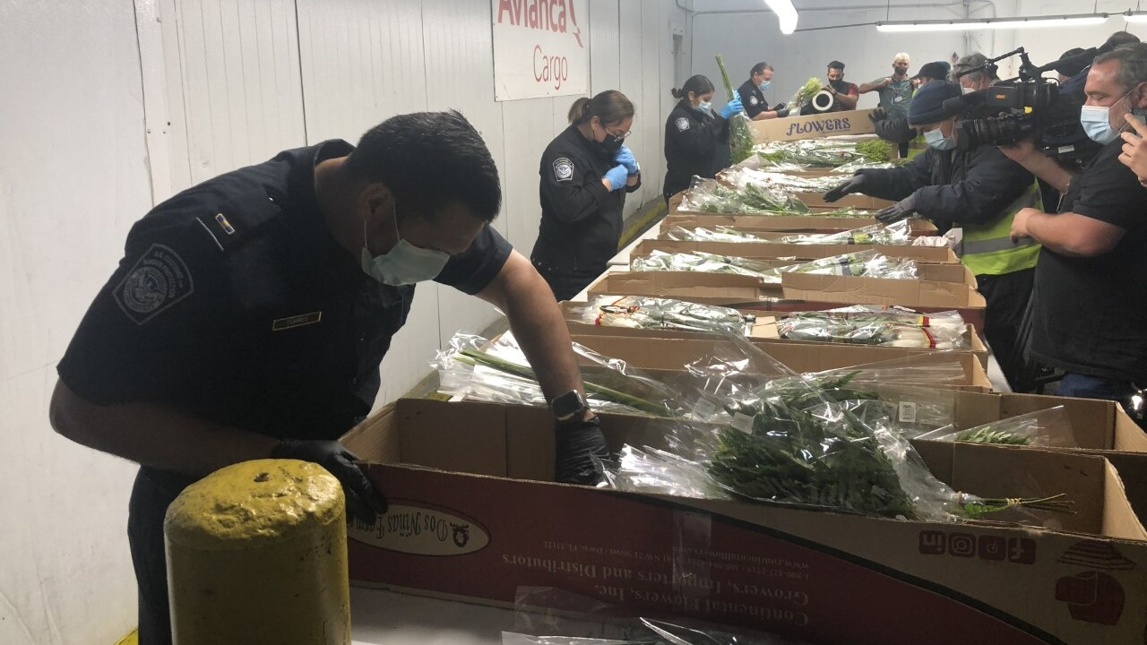 Customs officials inspect flowers at Miami International Airport on Feb. 11, 2021