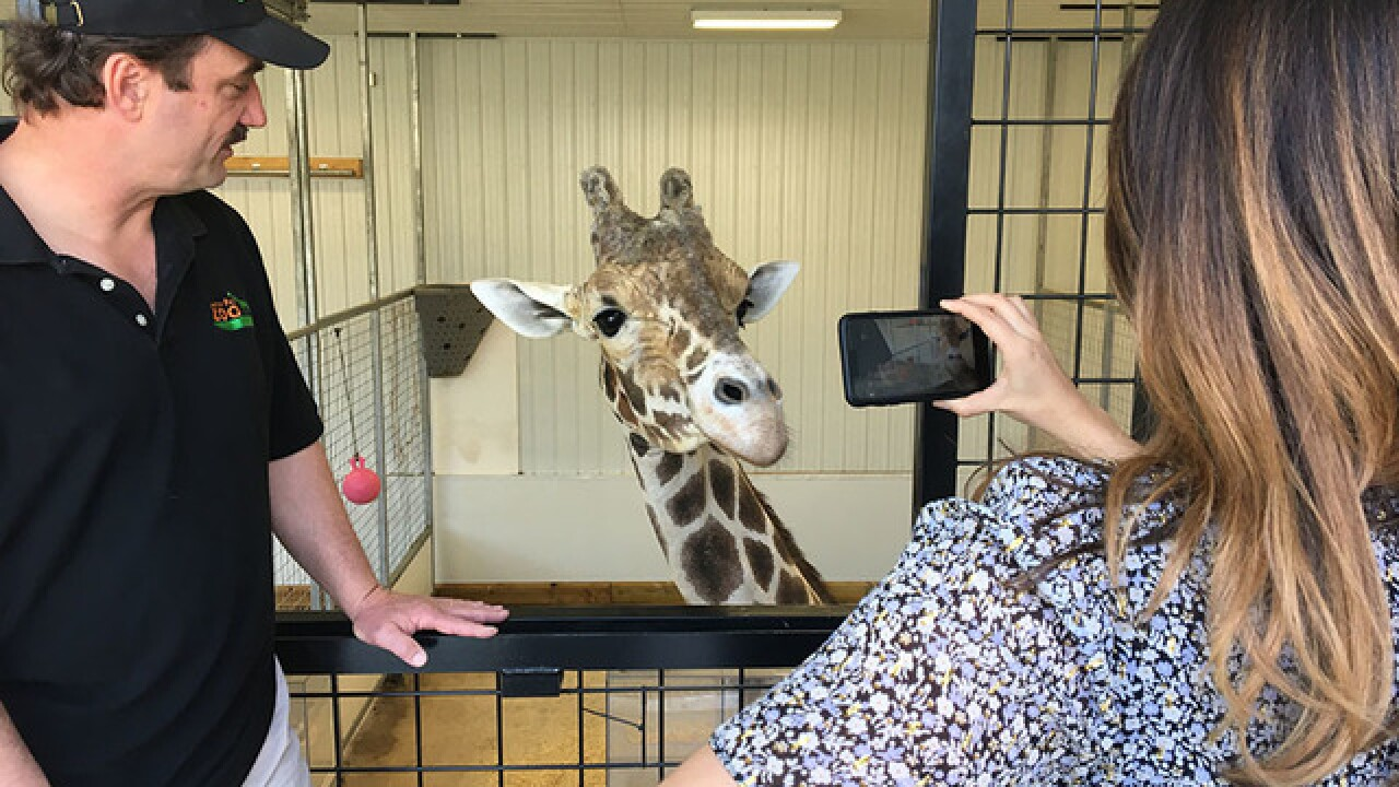 Jimmie the Giraffe gets a new home