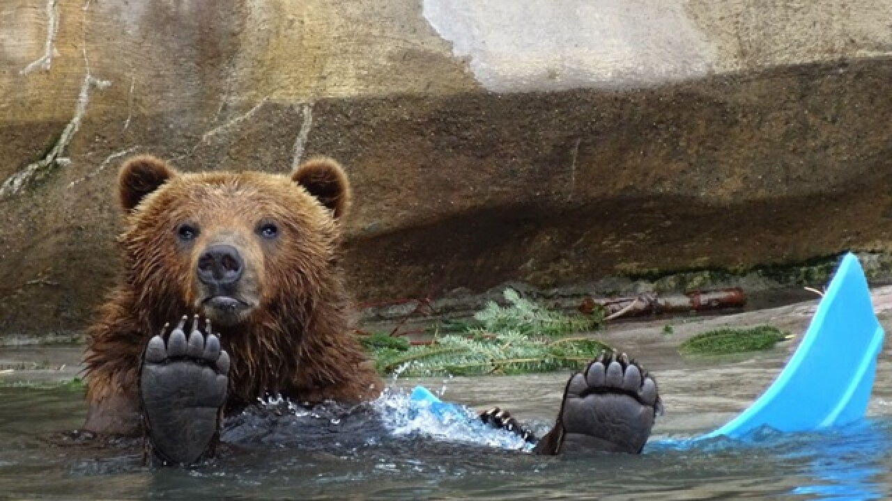 Detroit Zoo helps animals cool off today with frozen treats