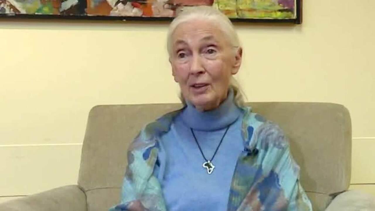 Jane Goodall at Florida Atlantic University of March 19, 2019.