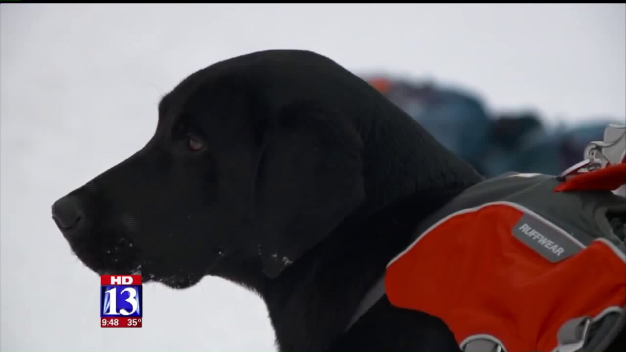 Utah avalanche dog training program marks 40thyear