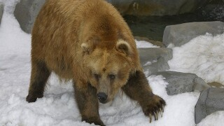 Authorities release names of victims mauled by bear in Alaska