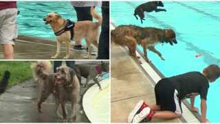 """Dogs soak it up during annual """"Drool In The Pool"""""""