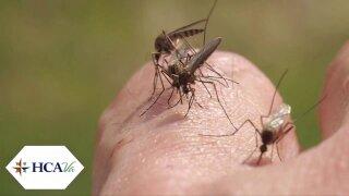 Virginia doctor shares 'best bet' in preventing mosquito-borneviruses