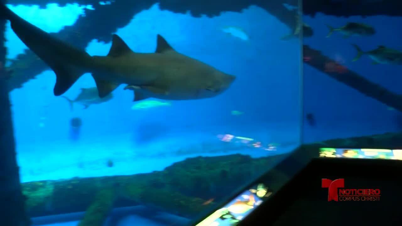 Texas State Aquarium 0703.jpg