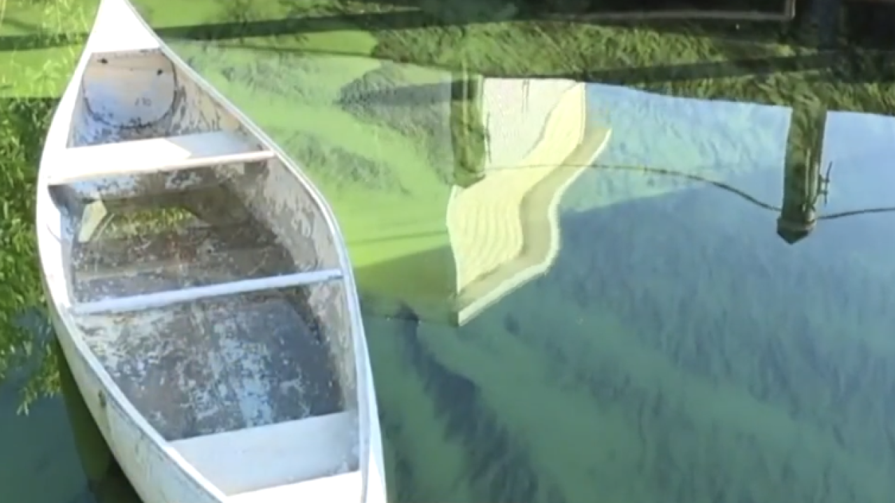 wptv lake o blue green algae.PNG