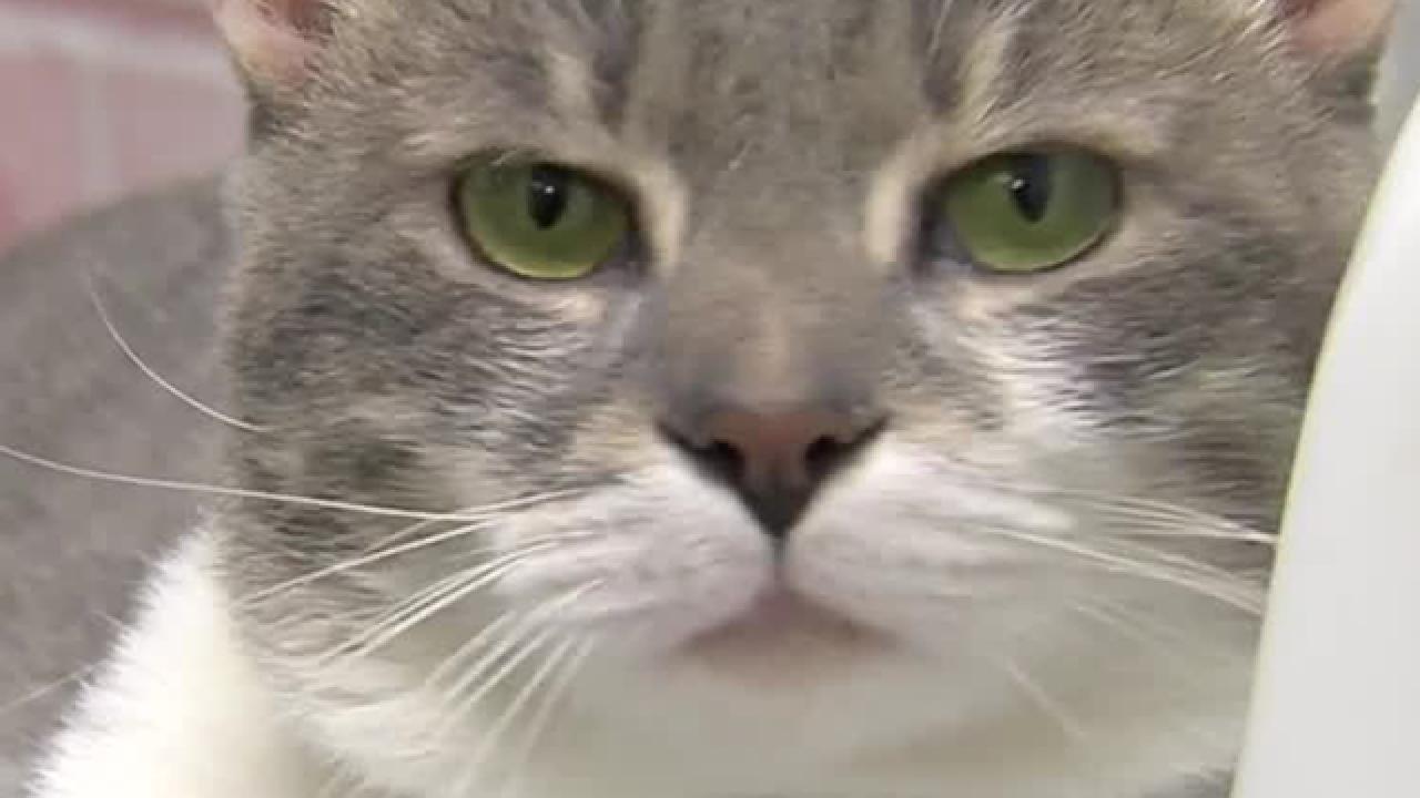 Public plea made for pet adoptions