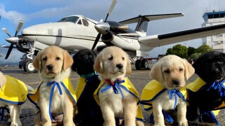 thumbnail_Canine Companions puppies ready for take off.jpg