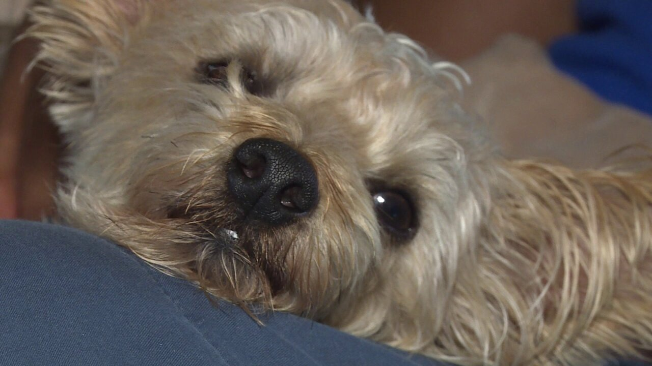 Emotional support dog lost during Hampton crash has beenfound