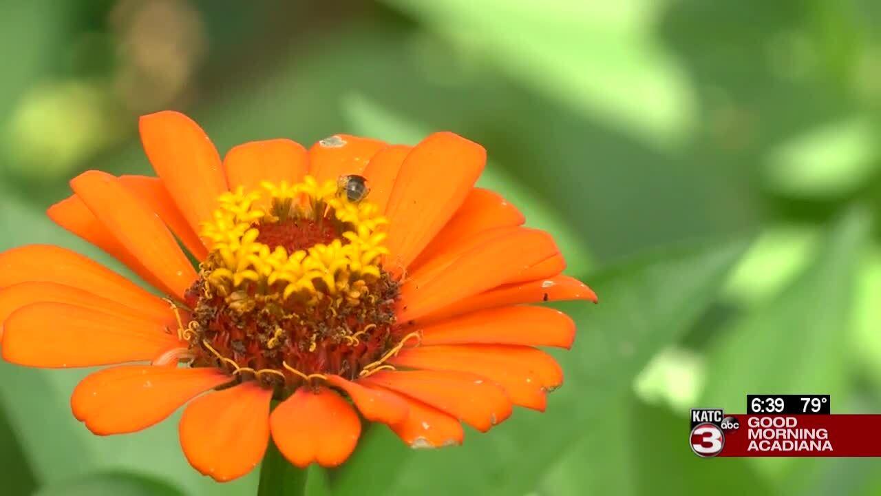 summer native garden flower