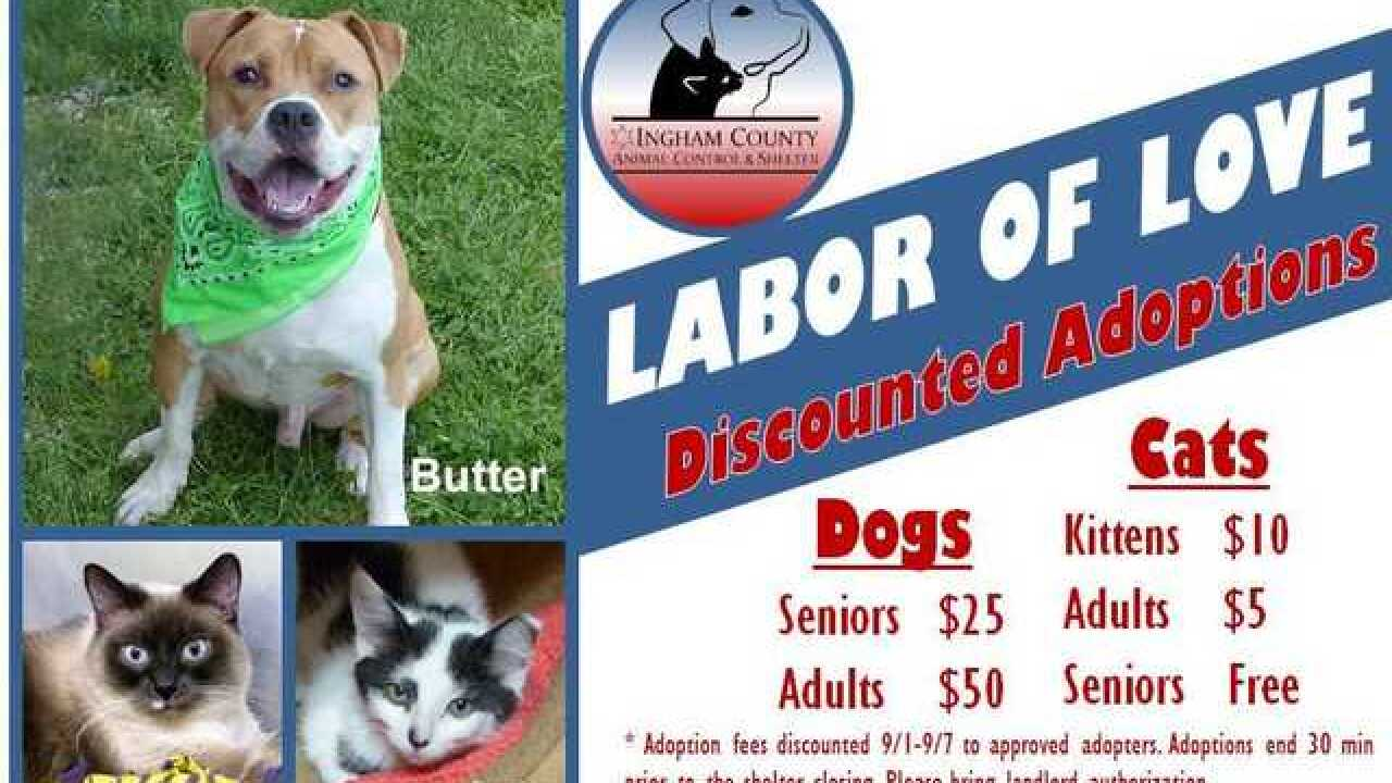 Labor of Love- Discounted Pet Adoptions All Week