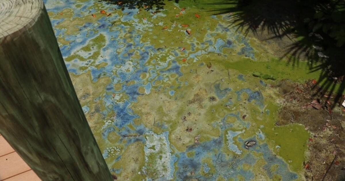 New blue-green algae alert and continued alerts at NE lakes