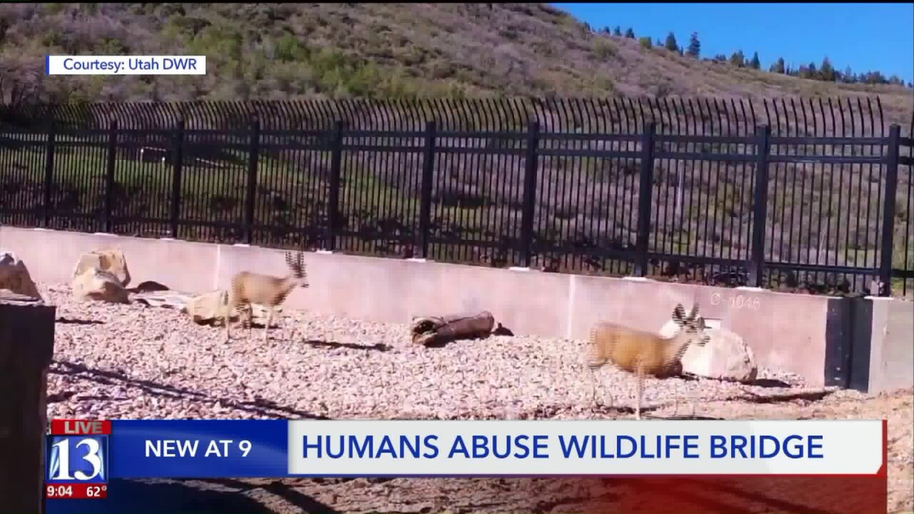 Humans could cause issues for animal use of I-80 wildlife overpass